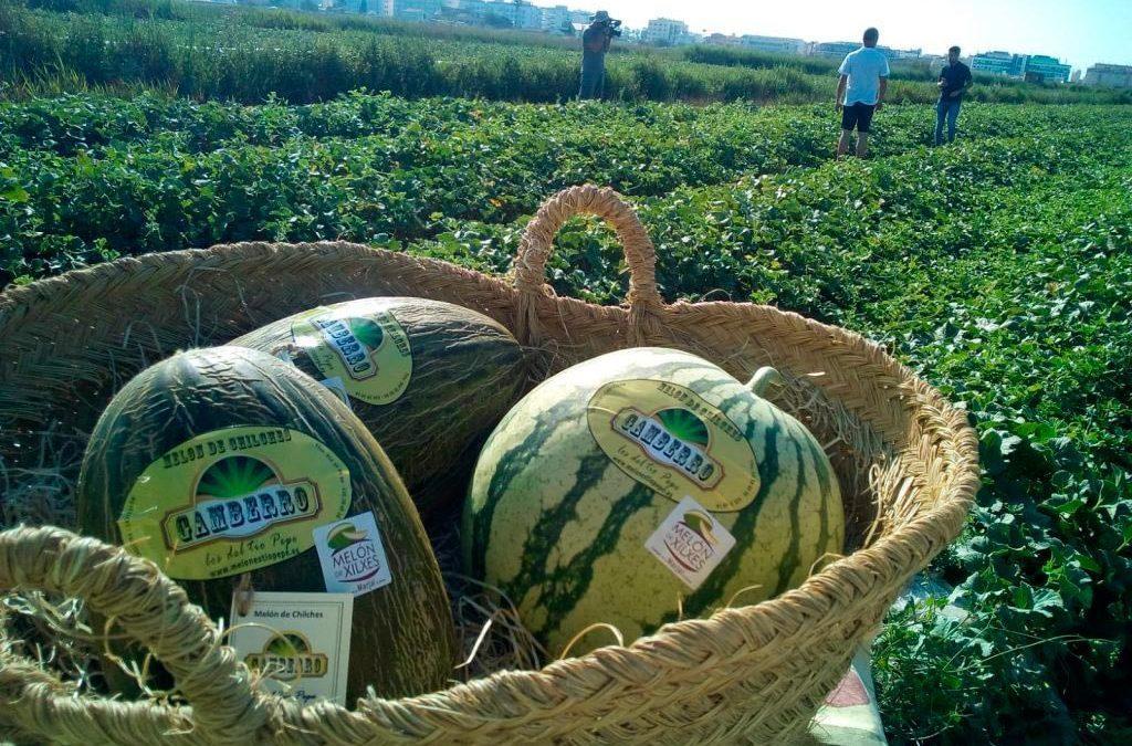 Chilches, la tierra del mejor melón