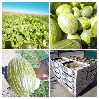 Empezamos la temporada de melón y sandía